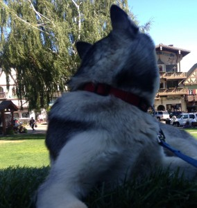 husky_leavenworth