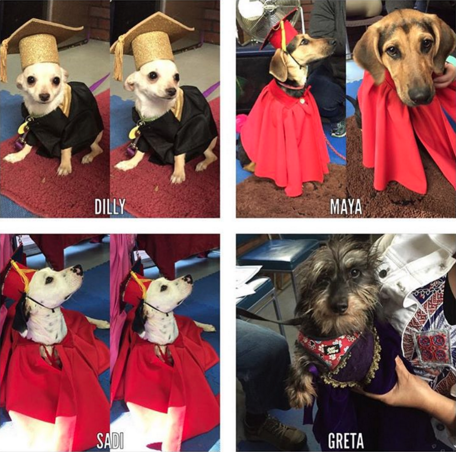 Doggy Grads